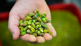 Proteína de pistacho, otro aliado para que crezcan tus músculos