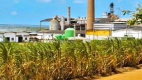 Biocombustibles: La clave para reactivar la economía tras la pandemia