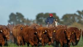 El programa de evaluación genética de Angus superó los 600 mil animales