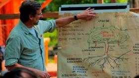 Promueven la incorporación de árboles en plantaciones yerbateras
