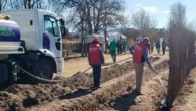Plantarán más de 25 mil árboles en caminos de toda la provincia