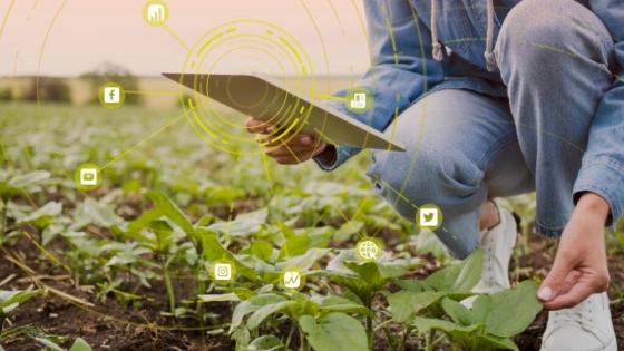 Aprende a aplicar una estrategia de marketing en la agricultura familiar
