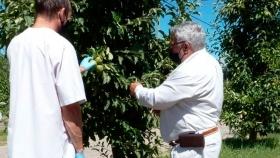 En el 2020, Chubut avanzó en políticas de sanidad vegetal junto a productores e instituciones