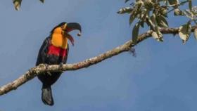 Los impactos antropogénicos sobre las relaciones entre plantas y aves dispersoras de semillas