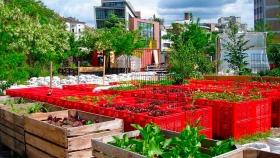 La agricultura urbana, una tendencia que genera emprendimientos