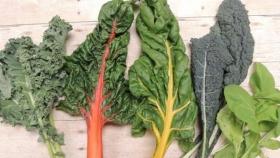 La acelga, otra gran aliada de la báscula: rica en fibra, vitaminas y poco calórica