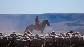 Destacan el manejo adaptativo del pastoreo como una alternativa virtuosa para la Patagonia