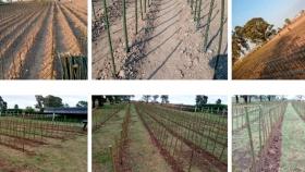 Plan Agroforestal: 20 mil sauces ya están en el Vivero de Viamonte