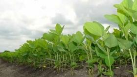 La expansión del cultivo de soja amenaza a la mayor sabana de Sudamérica