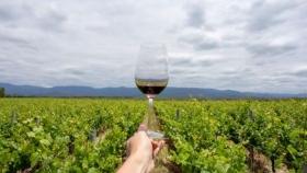 INPROTUR promocionó las rutas vinícolas de Argentina ante 1.000 agentes de viajes mexicanos