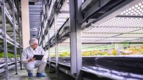 Las granjas con cultivos en pisos y sin tierra se abren paso poco a poco