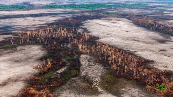 Optimización y ampliación del Sistema de Alerta Temprana de Deforestación