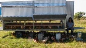 Más instalaciones móviles para la avicultura