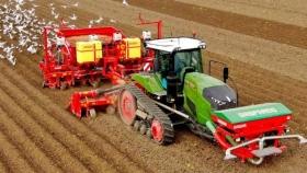 Plantar o no plantar patatas en los Países Bajos en 2021