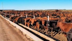 Calidad de agua y resistencia bacteriana, las preocupaciones de científicos argentinos por la producción cárnica