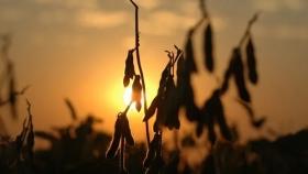 El dato del USDA que deja fuertes subas para la soja y el maíz en el mercado de Chicago