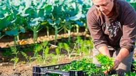 La agroecología gana territorio en Viedma y la Patagonia frente a la producción tradicional con agroquímicos