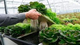 Los productos hidropónicos no deberían ser certificados como orgánicos según agricultores de EE.UU.
