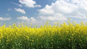 Los agricultores canadienses obtienen ganancias récord a medida que se disparan los precios de los cultivos