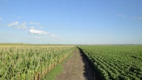 Proyectan que el agro aportará en 2021 una producción por más de US$ 40.000 millones