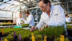 Lanzan herbicida con un nuevo principio de acción