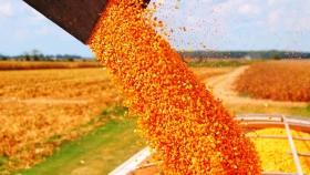 Explosión de ventas de maíz