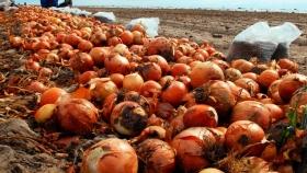 Producción de cebolla: ecologistas versus agronegocios