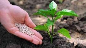 Fertilización fosfatada biológica (ffb)