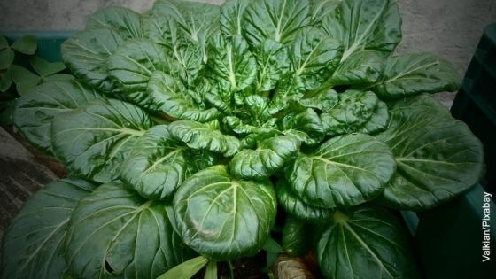 Cómo sembrar espinaca, ¡te contamos el secreto para hacerlo