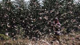Los agricultores están convirtiendo la peor plaga de langostas en Kenia en 70 años en una oportunidad