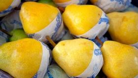 Aumentó la exportación de pera y manzana a Rusia en el primer trimestre del año