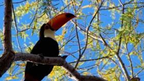 Ecoturismo: ¿una alternativa sostenible para el Gran Chaco?
