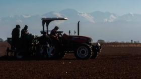 Hortalizas: con casi 16 mil hectáreas el sector vuelve a los promedios histórico