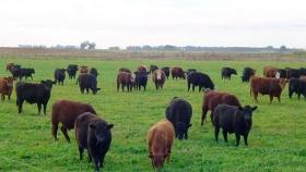 La mesa provincia de carnes trabaja en generar nuevos circuitos para favorecer el arraigo rural en el interior