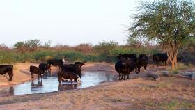 Fuentes alternativas o complementarias de agua: Tajamares