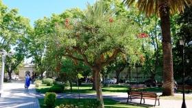 Día Provincial del Árbol en Mendoza