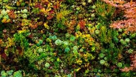 Sistemas de riego para techos verdes y jardines verticales