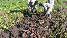 Chaco creó el Instituto de Agricultura Familiar y Economía Popular para fortalecer la producción rural