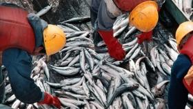 La actividad pesquera tuvo un crecimiento interanual del 12,3%