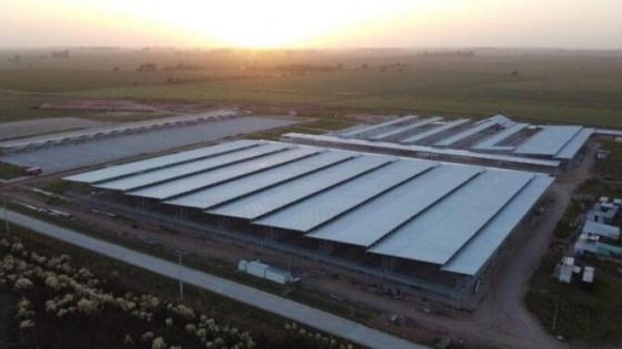 El mercado ganadero de Cañuelas entró en la recta final: Las operaciones de Liniers se mudarían a mitad de año