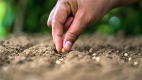 Promueven la producción y el rescate de semillas nativas y criollas para la agricultura familiar