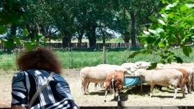 Un grupo de emprendedores apuesta a un proyecto de turismo rural accesible