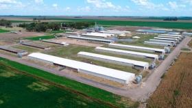 El plan chino, sin los chinos: Isowean, un grupo cordobés, quiere llegar a tener granjas con 10 mil madres y frigorífico propio