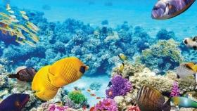 La biodiversidad de la Gran Barrera de Coral permanece en alerta por el cambio climático