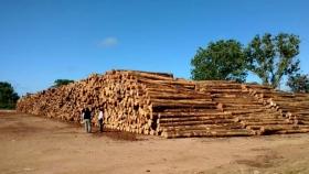 Frutifor Lumber Company instalará la mayor y más avanzada planta de madera contra laminada (CLT) y glulam de Sudamérica en Uruguay