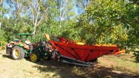 Con mejoras genéticas sube la producción de almendras en Neuquén