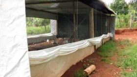 Galpones avícolas plásticos para productores familiares del norte misionero