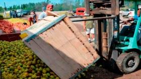 El sector agroexportador es el único que obtiene superávits comerciales intra-sectoriales generosos, lo que muestra su capacidad internacional