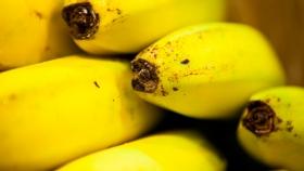 Los productores de banana deben inscribirse obligatoriamente en el Renspa