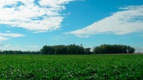 Por provincia: el mapa de las hectáreas agrícolas aseguradas en Argentina
